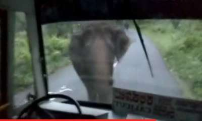 latest-news-driver-hits-reverse-as-elephant-charges