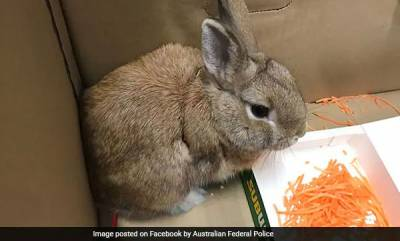 world-abandon-bunny-sparks-bomb-scare-at-airport
