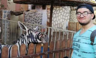 world-egyptian-zoo-denies-their-zebra-is-a-donkey-after-photo-goes-viral