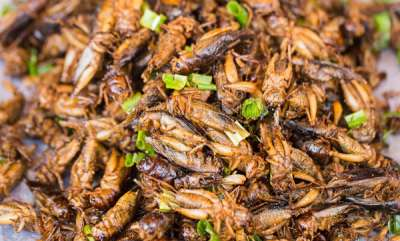 life-style-reasons-to-eat-crickets