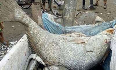surprise-mumbai-fisherman-brothers-fetched-5-lakh-for-fish