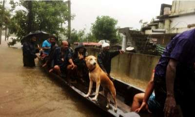 latest-news-woman-saved-her-25-dogs-from-flood