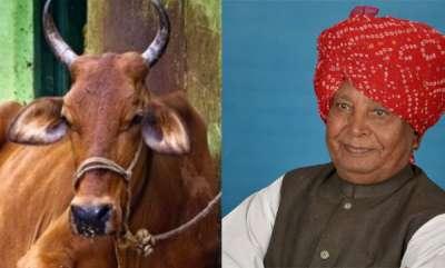 latest-news-cow-hits-bjp-mp-liladhar-vaghela