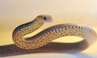 latest-news-rat-snake-bites-judge-in-court-chamber