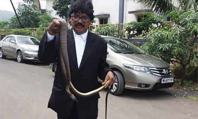 latest-news-snake-bites-panvel-judge-in-court-chamber