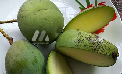 health-news-why-pregnant-women-like-eating-unripe-mangoes