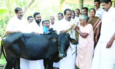 latest-news-rahul-ganghi-gives-cow-to-mary
