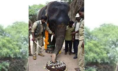 latest-news-elephant-rani-celebrating-her-80th-birthday