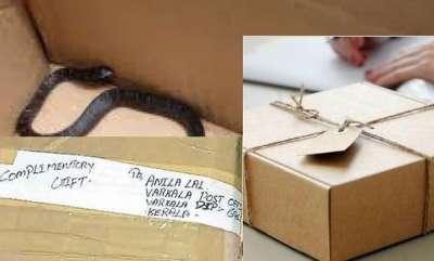 odd-news-snake-parcel-for-post-women