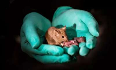environment-same-sex-mice-have-babies