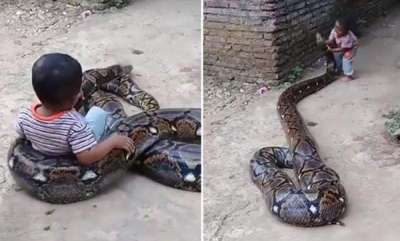 latest-news-little-boy-play-with-big-snake