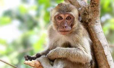 india-man-stoned-to-death-by-monkeys-family-wants-fir-to-be-registered-against-them