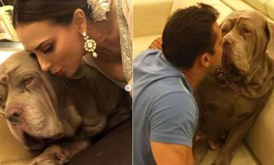 latest-news-salman-khans-pet-dog-my-love-dies