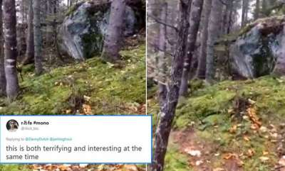 environment-is-the-forest-breathing-this-scientific-explanation-for-the-viral-video-of-a-jungle-in-canada