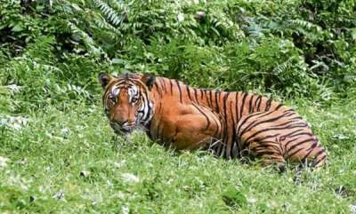environment-60-percent-of-global-wildlife-species-wiped-out