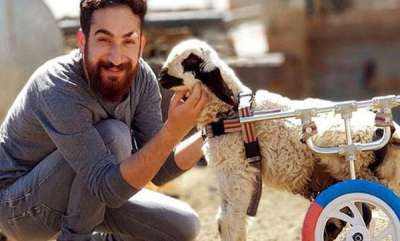 rosy-news-turkish-man-gives-disabled-animals-chance-to-walk-again