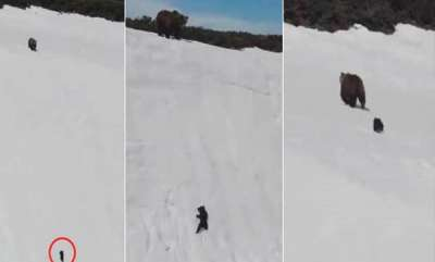 latest-news-baby-bear-struggling-to-reach-mum-on-a-clifftop-viral-video-ugly-truth