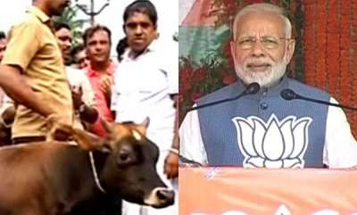 latest-news-pm-modi-raises-public-cow-slaughtering-in-kannur-in-madhyapradesh-election