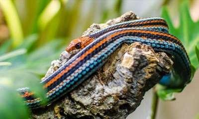 environment-sanfransisco-grater-snake