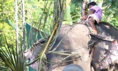 latest-news-elephant-attack