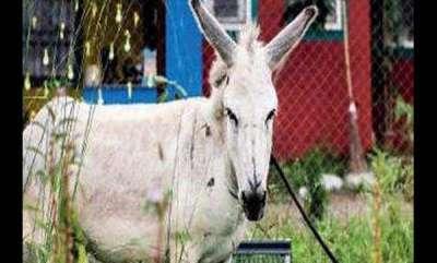 latest-news-singing-donkey-gone-viral-in-social-media