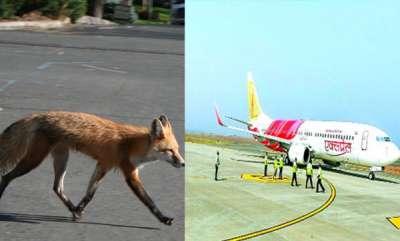 latest-news-fox-in-kannur-airport