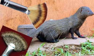 latest-news-painting-brushes-made-of-mongoose-hair