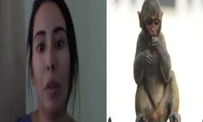 environment-woman-jailed-for-three-years-for-harassing-a-monkey