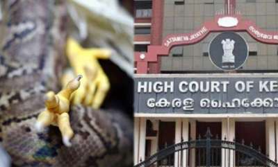 latest-news-hc-wants-explanation-for-making-spit-chicken-swallowed-by-python