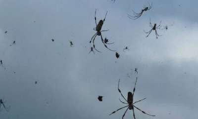 environment-its-raining-spiders-in-brazil