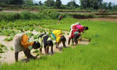 latest-news-govt-likely-to-replace-subsidies-with-cash-for-farmers