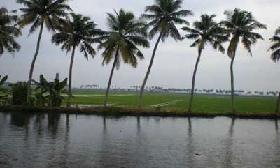 kerala-1000-cr-for-kuttanad-package-and-500-cr-for-rubber-sector