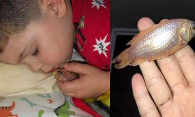 latest-news-little-boy-accidentally-kills-goldfish-after-cuddling-it