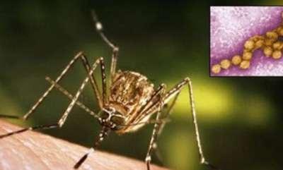 latest-news-danger-fever-in-malappuram