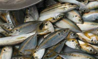 latest-news-chemical-in-fish