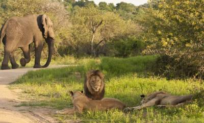 latest-news-rhino-poacher-killed-by-an-elephant-and-then-eaten-by-lions