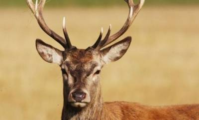 latest-news-deer-attacked-death