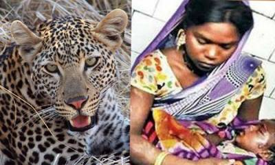 latest-news-mom-fights-off-leopard-with-bare-hands-after-it-attacks-her-18-month-old-baby
