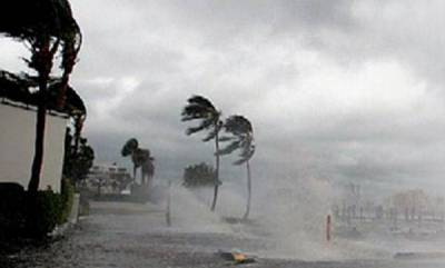 latest-news-tree-fall-in-heavy-rain-three-died