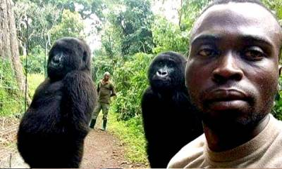 latest-news-gorilla-selfie-viral-photo