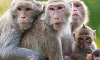 latest-news-monkey-fever-in-wayanad