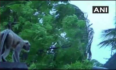 india-six-killed-as-cyclone-fani-batters-odisha