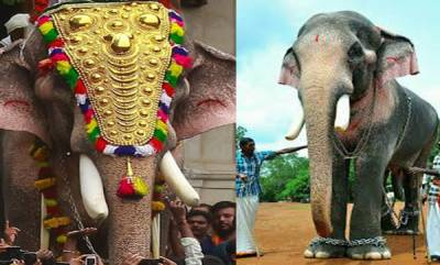 latest-news-elephant-owners-association-protest-agisnt-govt-decision-on-thechikottukavu-ramachandran-issue