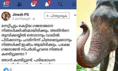 latest-news-doctors-facebook-post-about-elephant-attack
