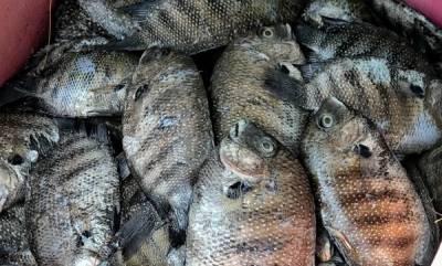latest-news-fish-market
