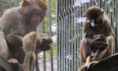 environment-monkey-not-ready-to-leave-its-dead-baby