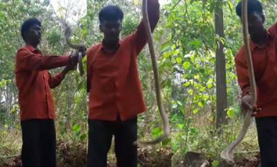 environment-vaava-sueshs-video-goes-viral