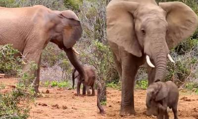 environment-bad-tempered-elephant-hits-baby-with-massive-trunk-before-mum-intervenes