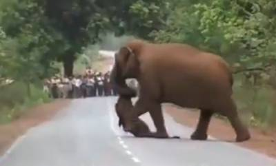 latest-news-funeral-procession-of-the-weeping-elephants-carrying-dead-body-of-the-child-elephant
