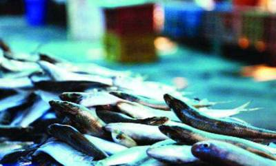latest-news-price-of-fish-increase